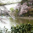 """Unique Destination: """"Tokyo Zenpukuji Park"""" in Nishi-Ogikubo"""