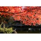 "Unique Destination: ""Sanshinomori Park"" in Koenji"