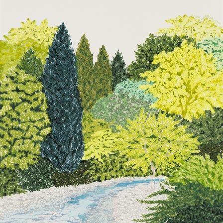 Summer Selection: Drawing Nature
