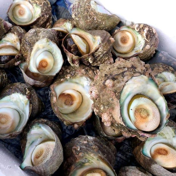 【海鮮BBQ体験】 ※BBQ用の魚貝類手配