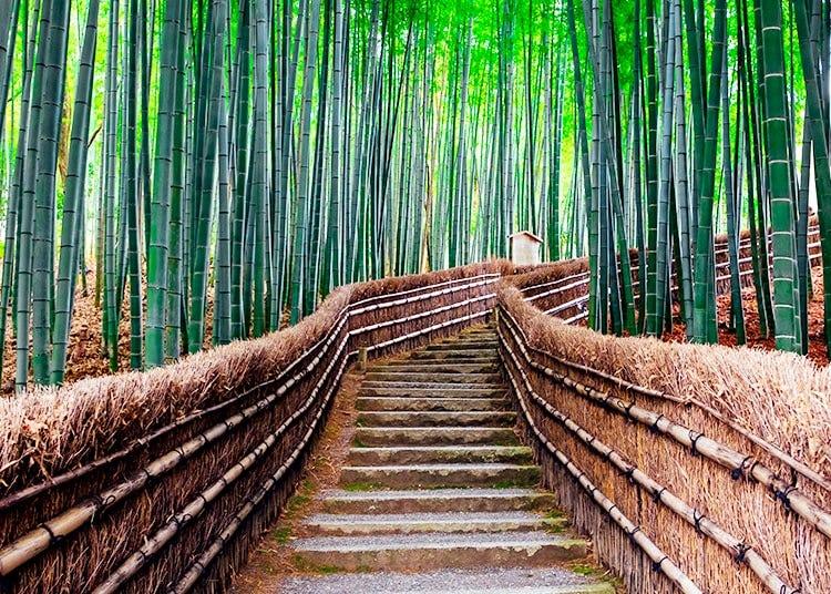 嵐山、太秦