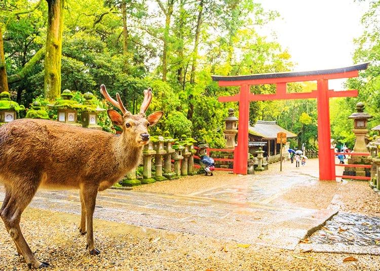 Nara / Ikoma / Tenri