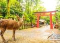 Nara, Ikoma, Tenri