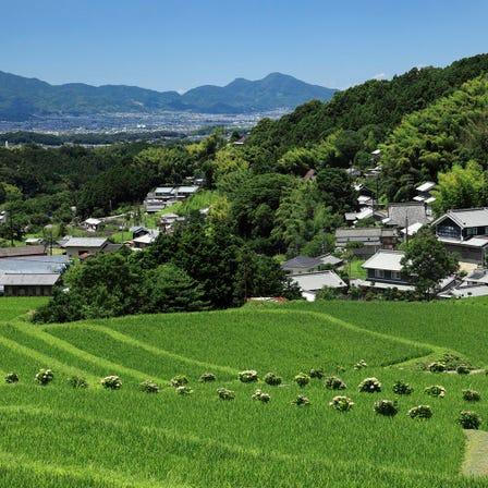 Desa Pertanian