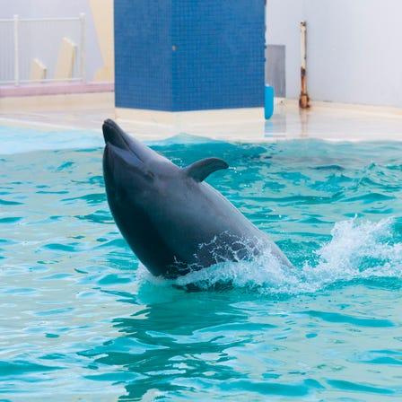สวนสัตว์ พิพิธภัณฑ์สัตว์น้ำ และสวนพฤกษศาสตร์