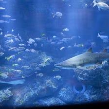 Sumida Aquarium