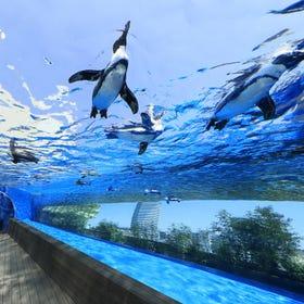 阳光水族馆
