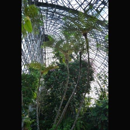 夢之島熱帶植物館