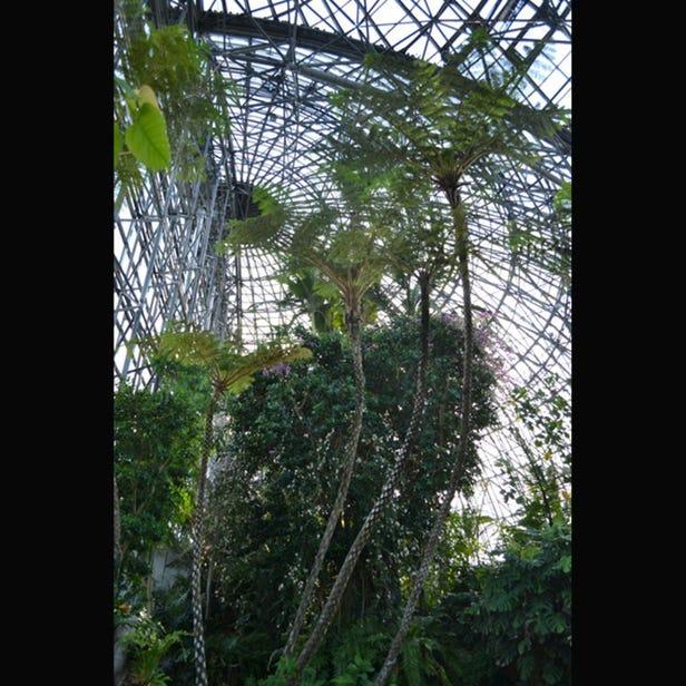 梦之岛热带植物馆