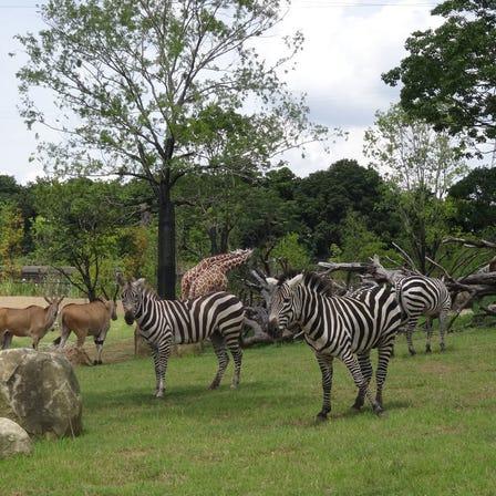 요코하마 동물원 주라시아