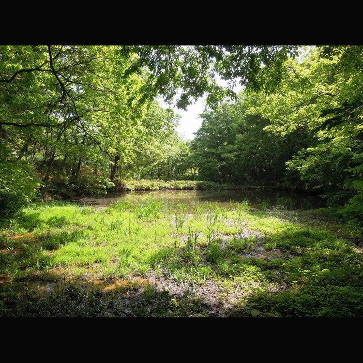 보다이기 연못