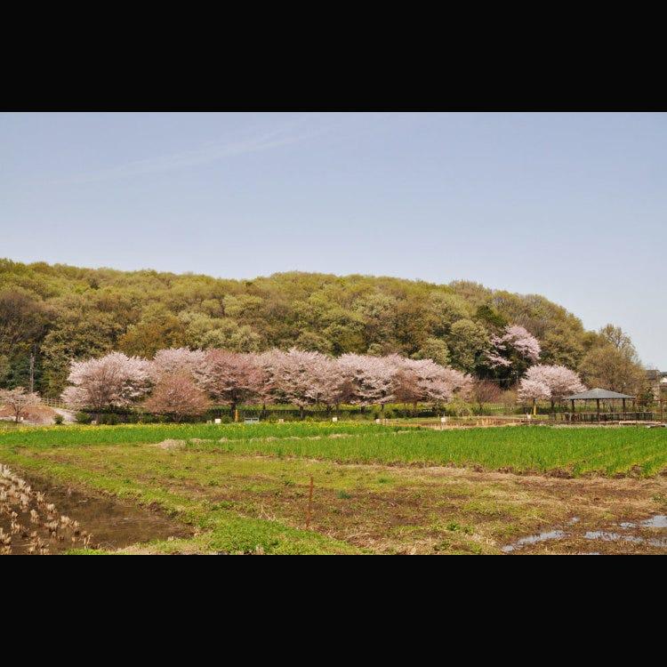 Hachikokuyama Ryokuchi