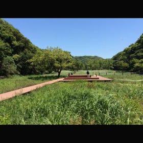 코아지로의 숲