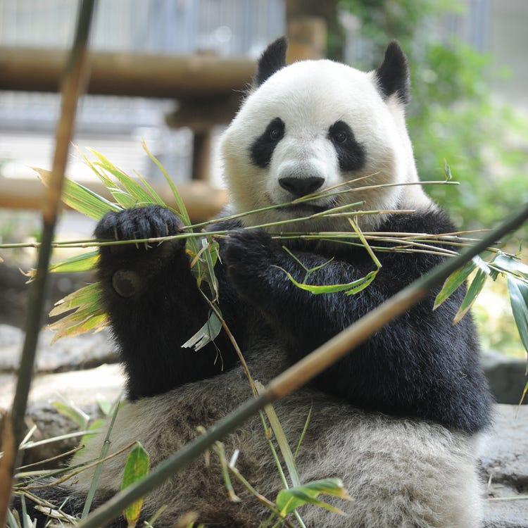 恩賜上野動物園 (上野|動植物園・水族館) - LIVE JAPAN (日本の旅行 ...
