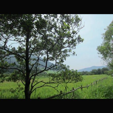 仙石原濕原植物群落