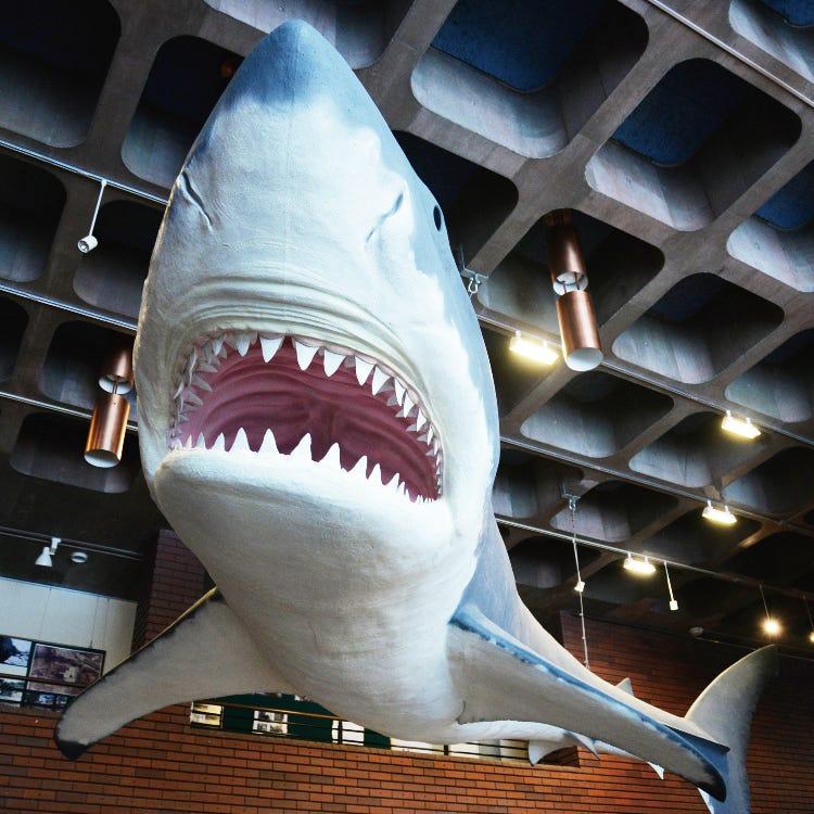 Saitama Museum of Natural History