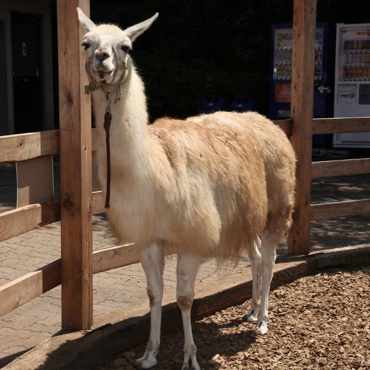 Hodosan Zoo Park