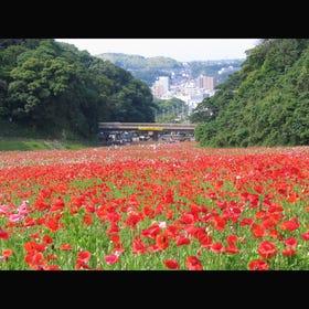 Yokosuka Kurihama Flower Park
