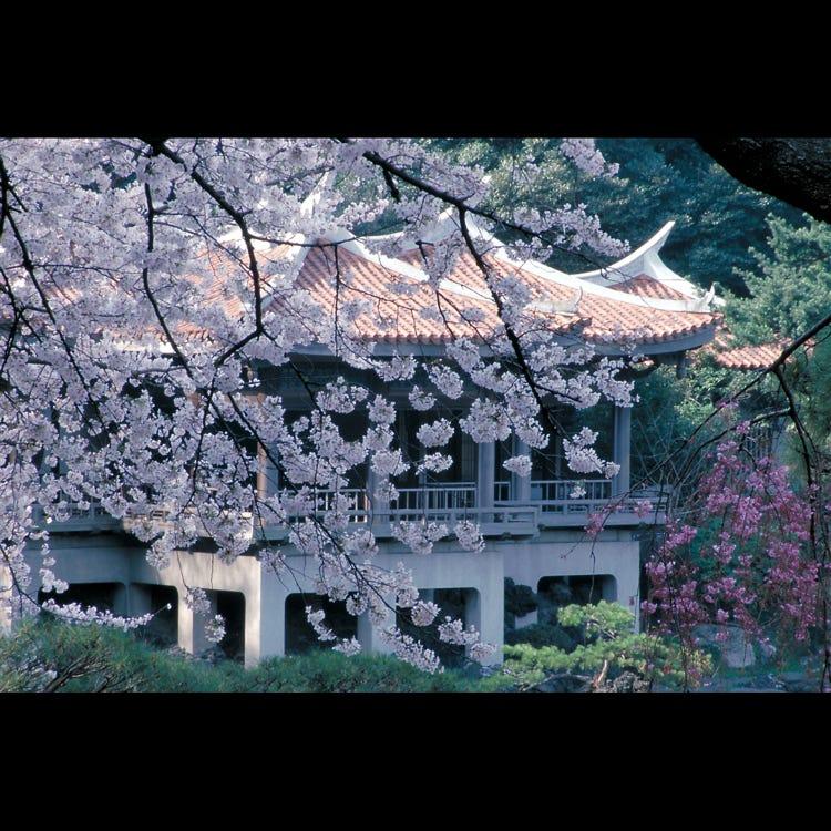 Shinjuku Gyoen National Garden