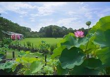 神代植物公园