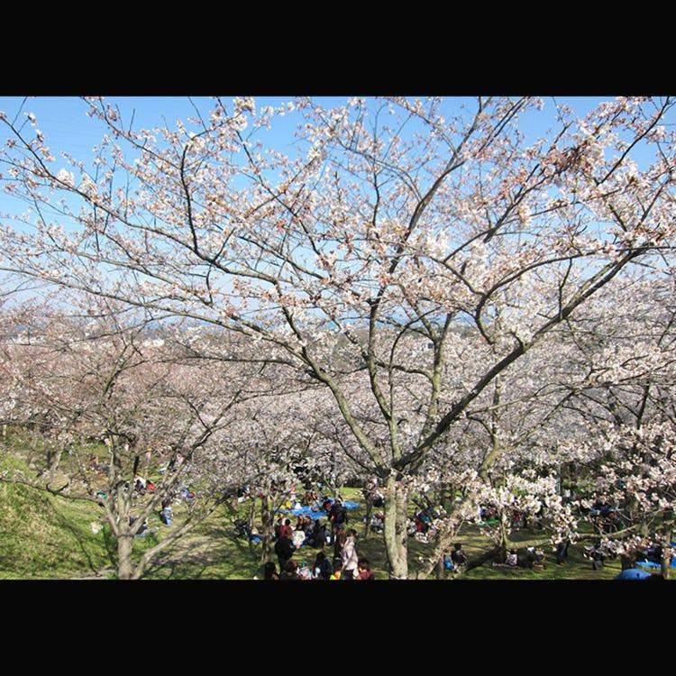 Tsukayama Park