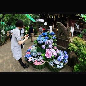 Hakusan-Jinja Shrine