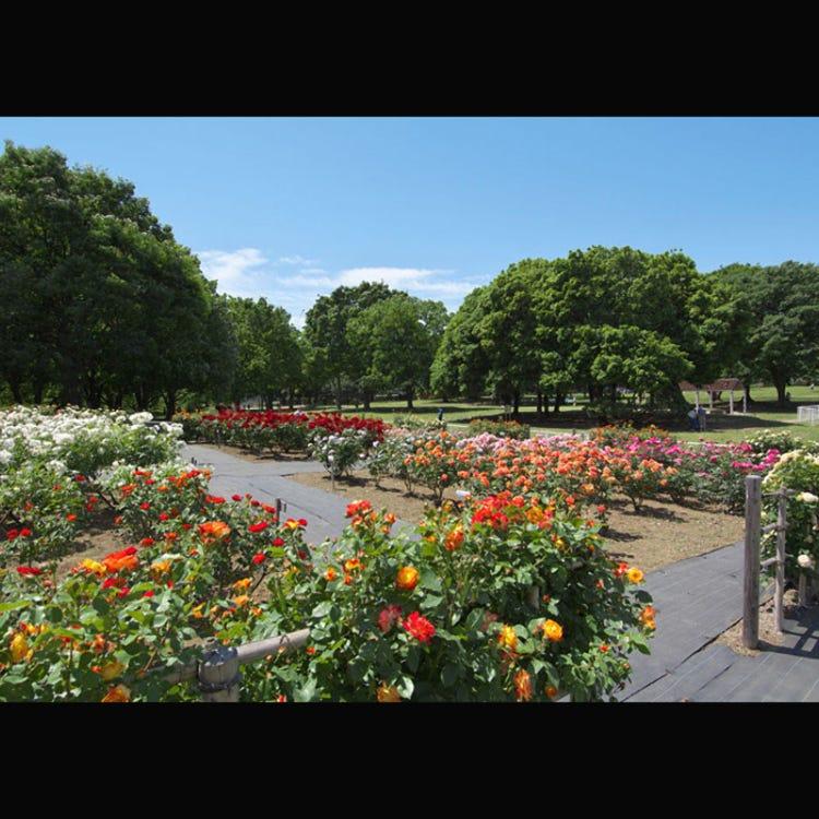 Kinuta Park