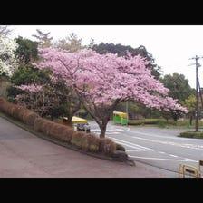 Himenosawa Park