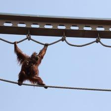 旭山动物园