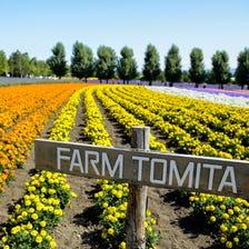 Farm Tomita