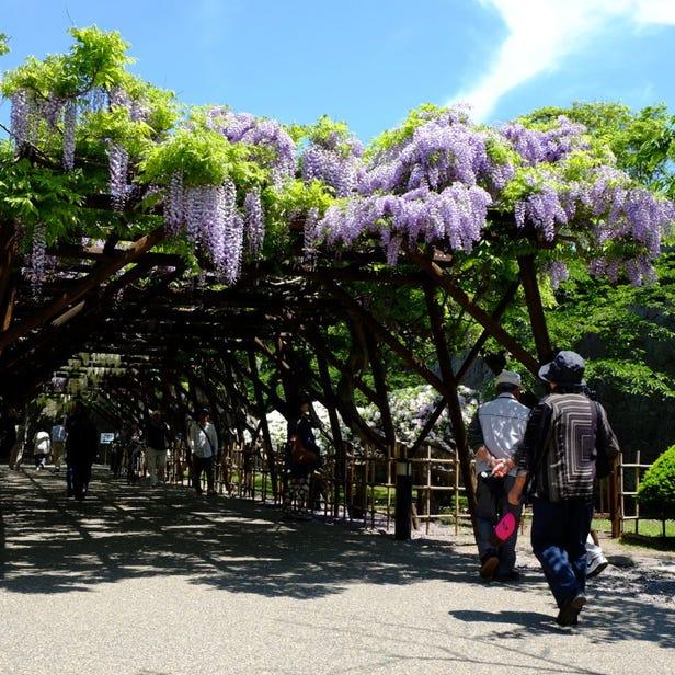 고료카쿠 공원