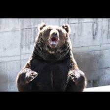 쇼와신잔 곰목장