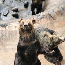 登別棕熊牧場