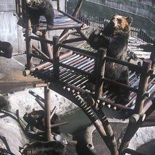 노보리베쓰 곰 목장