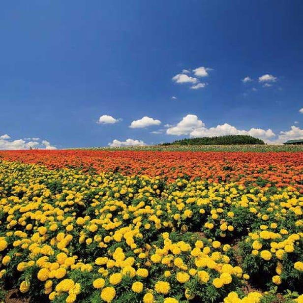 Flower Land Kamifurano