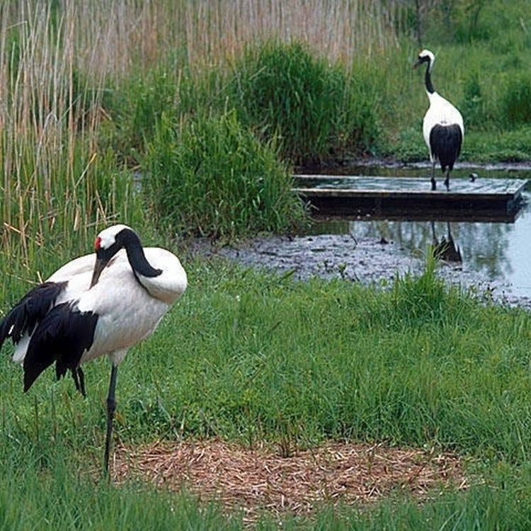 구시로시 단정학 자연공원