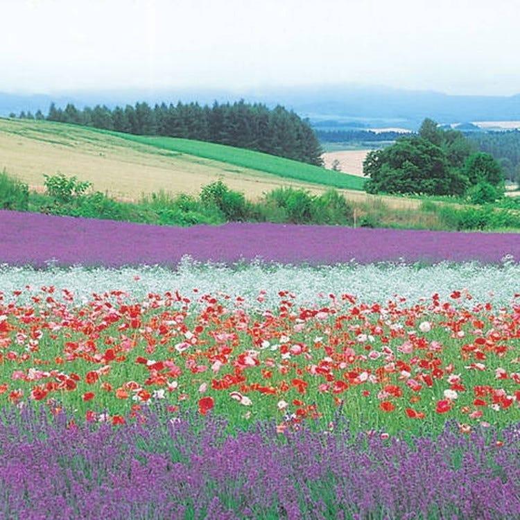 Takushinkan  photo gallery