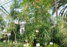 Hakodate Tropical Botanical Garden