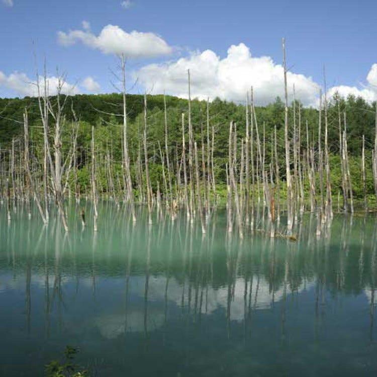 Biei platinum blue pond