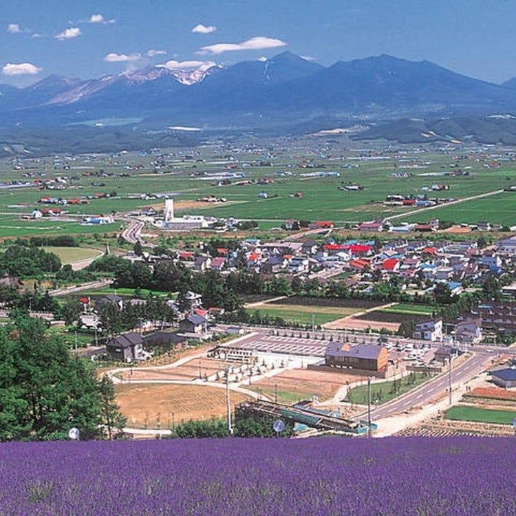 中富良野町營薰衣草園