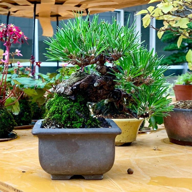 盆栽施設 上野グリーンクラブ