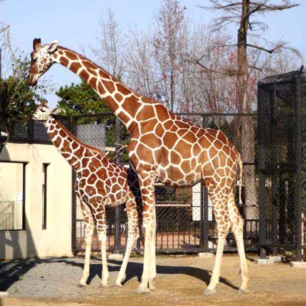 Kyoto City Zoo
