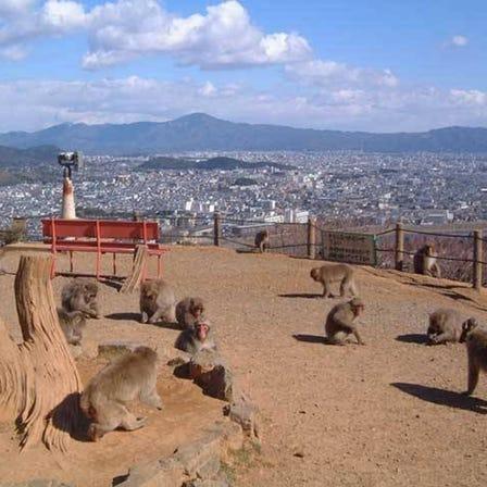 嵐山猴子樂園岩田山