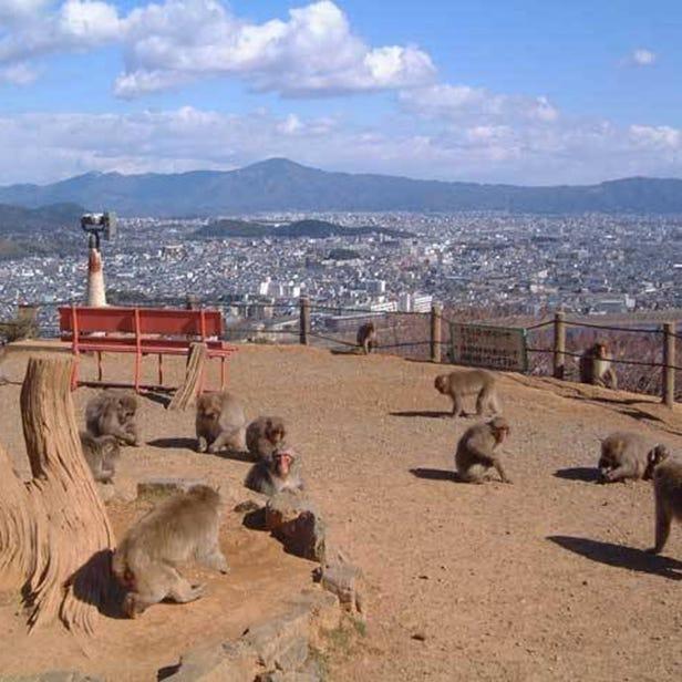 岚山岩田山猴子公园