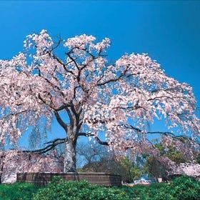 마루야마 공원