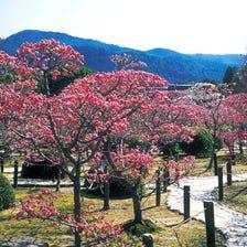 Zuishin-in Temple