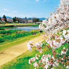 賀茂川的半木之道
