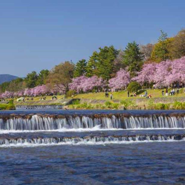 賀茂川半木の道