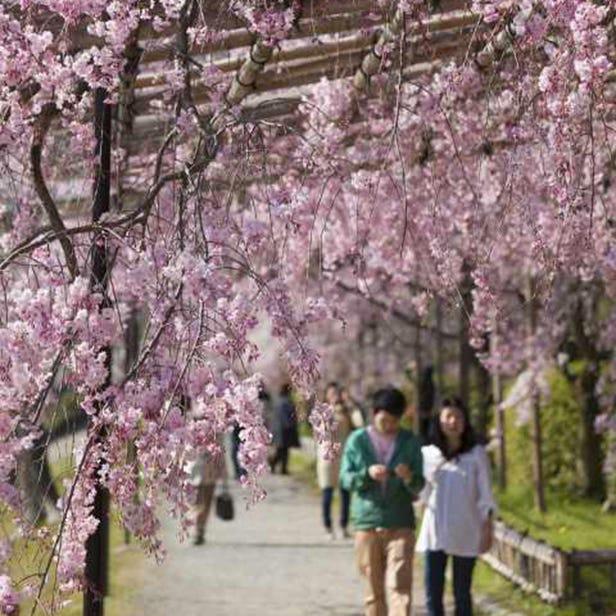 가모가와 나카라기노미치 길