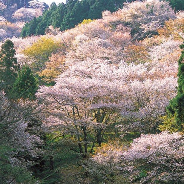 Yoshino-yama